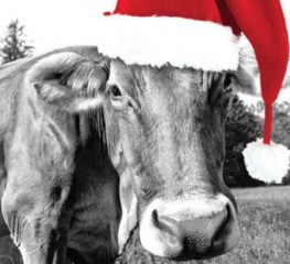 Winter and Christmas Hotel Breaks at the Red Cow Moran Hotel